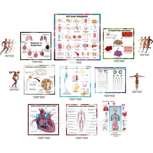 Оформлення кабінету анатомії в школі та коледжі